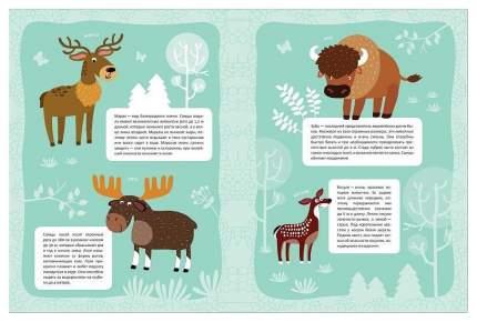Книга В Мире Животных Зеленый лес