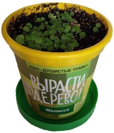 Набор для выращивания Вырасти, дерево! zk-035 Мелисса