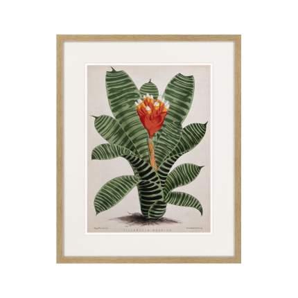 Литография Exotic plants of the world №8, 1815г., 52 x 42 см, Картины в Квартиру