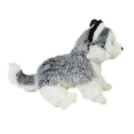 Мягкая игрушка Teddykompaniet Хаски, лежащий, 26 см,7111