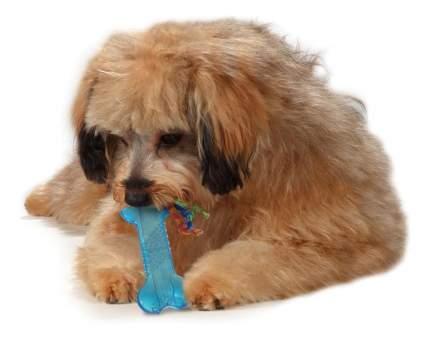 Косточка для собак Petstages, Резина, Хлопок, 871864002215