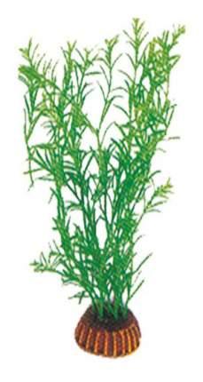 Laguna Растение Тетраклинис, 19 см