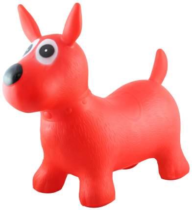 Собачка-попрыгунчик Shantou