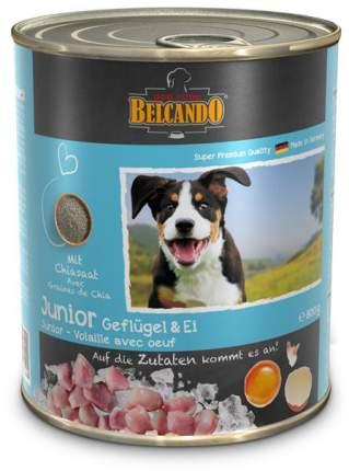 Консервы для щенков BELCANDO, домашняя птица, 800г