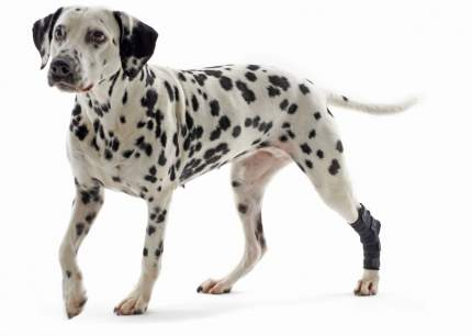 Протектор для собак Kruuse Rehab hock protector для скакательного сустава, черный, S