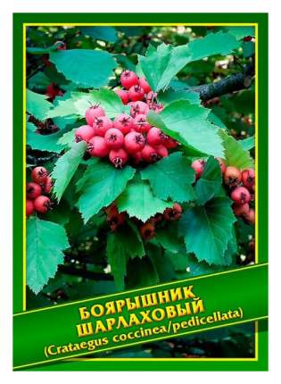 Семена Боярышник Шарлаховый, 1 г Симбиоз