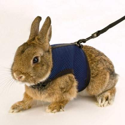 Поводок и шлейка Ferplast для кроликов, красный, черный