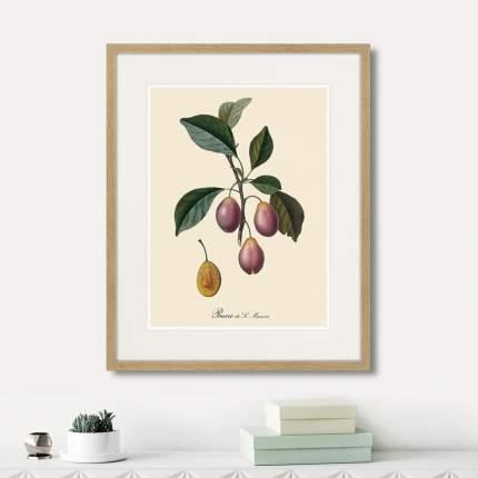 Коллекция Juicy fruit lithography №4 (из 6-ти картин), Картины в Квартиру