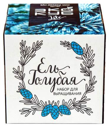 """Экокуб LITE набор для выращивания """"Ель Голубая"""" Эйфорд"""