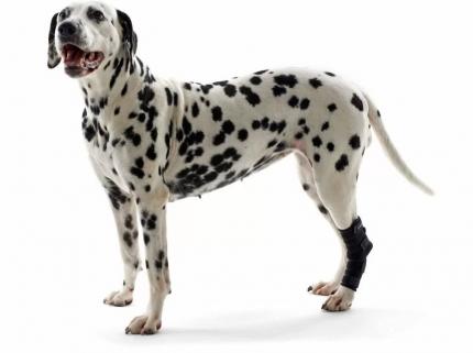 Протектор скакательного сустава Kruuse Rehab hock protector для собак (XS)