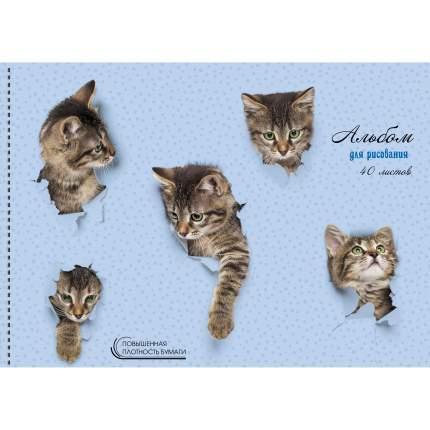 Альбом (40л 140 г/м Евроспираль) Милые котята, АСКЛ401939