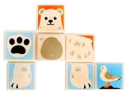 Конструктор магнитные кубики Полярные животные, 8 деталей Sima-Land