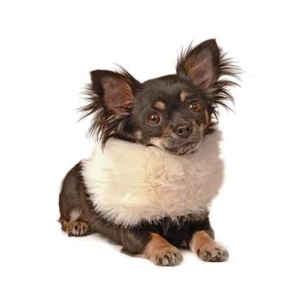 Шарф для собак Charlotte's Dress размер XS, S унисекс, белый
