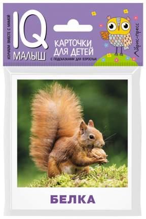 Набор карточек для Детей Айрис-Пресс Ходюшина Н.П. Iq Малыш кто Живет В лесу?