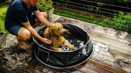Бассейн для собак Doog Large, черный, 122 х 122 х 30 см