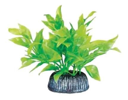 Laguna Растение Альтернантера зеленое, 8 см