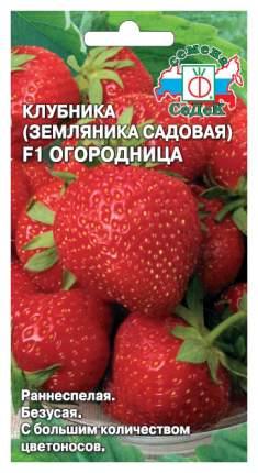 Семена Земляника Огородница F1, 15 шт, СеДеК