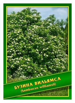 Семена Бузина Вильямса, 0,5 г Симбиоз