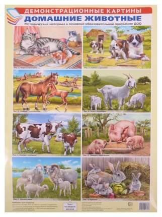 Сфера тц Демонстрационные картины, Домашние Животные, Методический Материал к Основной Обр