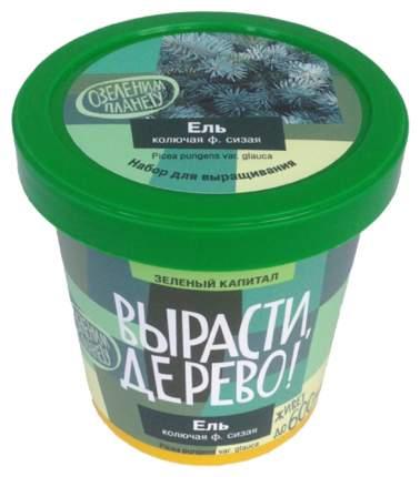 Набор для выращивания растений Ель колючая сизая