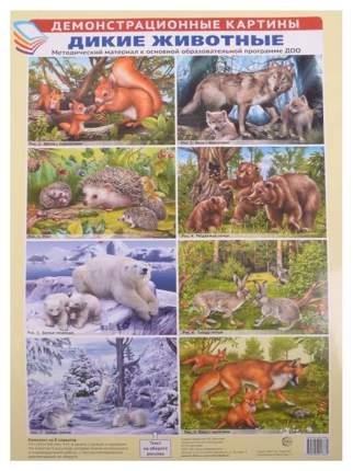 Сфера тц Демонстрационные картины, Дикие Животные, Методический Материал к Основной Образо