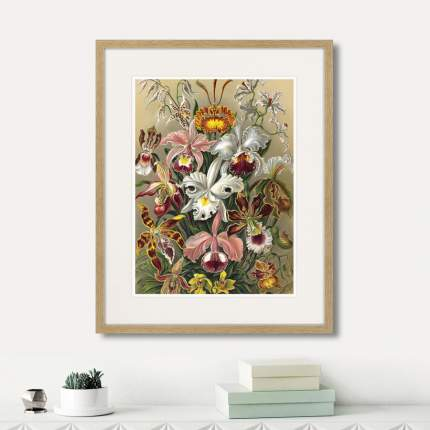 Коллекция Art forms of nature (из 2-х картин), Картины в Квартиру