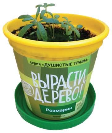 Набор для выращивания растений Вырасти, Дерево! Розмарин