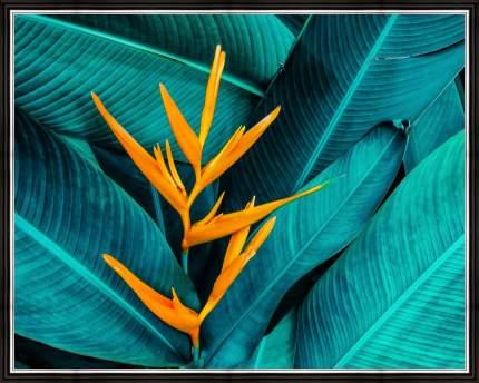 """Картина в багете 50х40 см """"Тропический цветок"""" Ekoramka BE-103-267"""