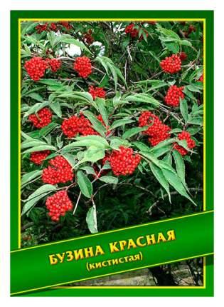 Семена Бузина Красная (Кистистая), 0,5 г Симбиоз