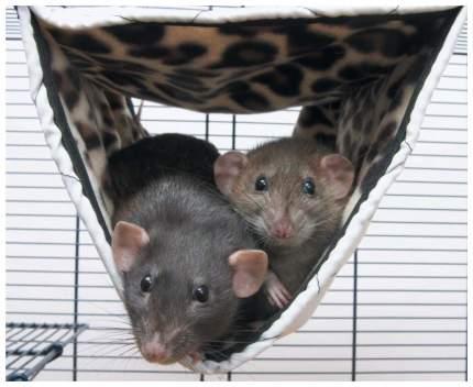 Гамак для хорьков, крыс Savic закрытый нейлон 24x31см в ассортименте