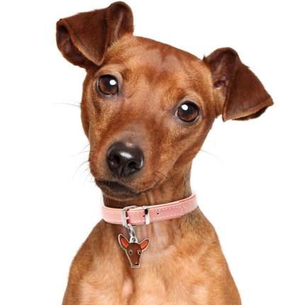 Адресник для собак My Family Colors Пинчер, средний, цвет: коричневый