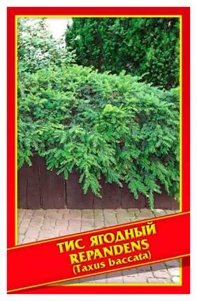 Семена Тис Ягодный «Repandens», 3 шт, Симбиоз