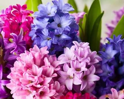 """Набор алмазной вышивки """"Яркие Грани"""" """"Цветы для любимой"""", размер 50х40см, 55 цветов"""