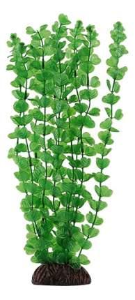 Laguna Растение Бакопа зеленая, 10 см