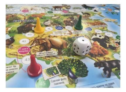 Настольная игра ГЕОДОМ Животный мир Земли