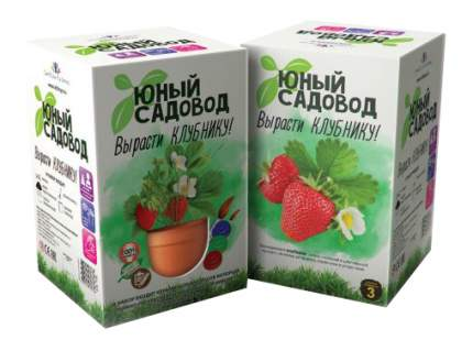 Набор для выращивания Юный садовод Вырасти клубнику 402 клубника