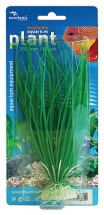 Искусственное растение Tecatlantis 20см