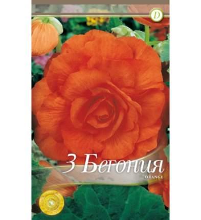 Семена Бегония DOUBLE ORANGE, 3 шт, Kebol
