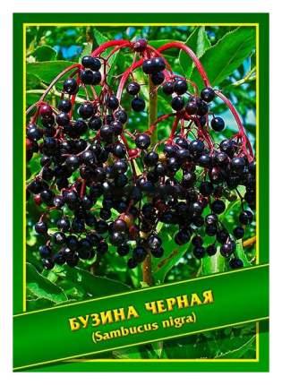 Семена Бузина Черная, 0,5 г Симбиоз