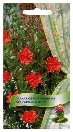 Семена Гранат Оранжевый мастер, 5 шт, Поиск