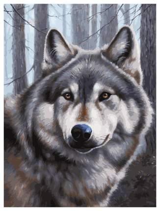 "Картина по номерам на ч/б холсте ""Волк"", 30 х 40 Белоснежка"