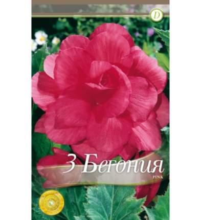 Семена Бегония DOUBLE PINK, 3 шт, Kebol