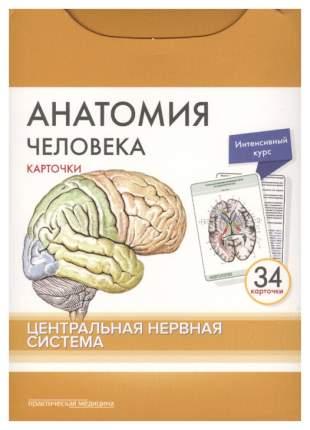 Анатомия человека. Центральная нервная система