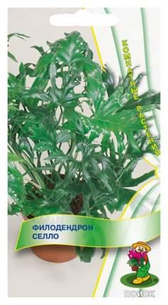 Семена Филодендрон Селло, 3 шт, Поиск