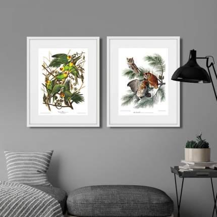 Коллекция Eastern Screech owl & Carolina Parrot (из 2-х картин), Картины в Квартиру