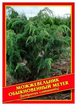 Семена Можжевельник Обыкновенный «Meyer», 5 шт, Симбиоз
