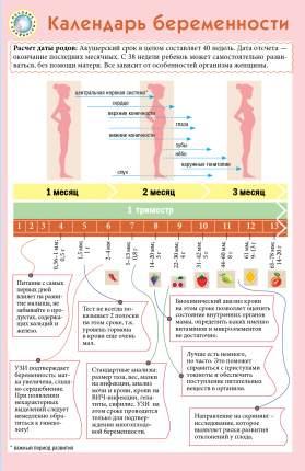 Книга календарь Беременности