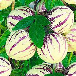 Семена Пепино (Дынная Груша), 5 шт, Семена Алтая