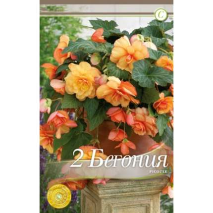 Семена Бегония CASCADE PICOTEE, 2 шт, Kebol