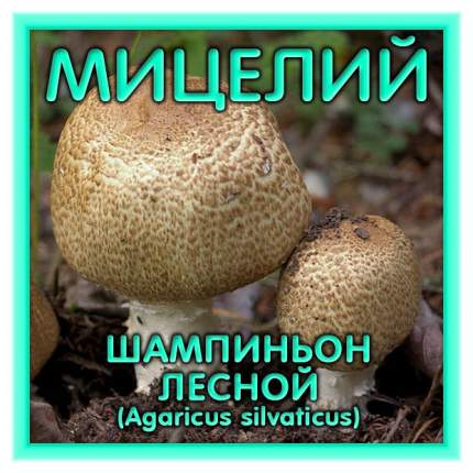 Мицелий грибов Зерновой Шампиньон Лесной, 150 мл Симбиоз